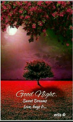 163 Best Good Night Wishes Images Good Evening Wishes Good Night