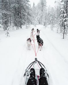 checking off one of our bucket list items... #lapland #finland #dogsled #finduslost