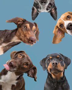 Big And Beautiful, Beautiful World, Minimal Web Design, Pet Photographer, Pet Shop, Animal Photography, Pitbulls, Germany, Vibrant