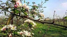 Prospettive da reggia  #reggiadivenaria #love #flowers #prospettiva #likeit #giardini #happiness #venaria #turin #picoftheday #pic #photography #view #amazing #sun #sunnyday #fiori #colori #spring #primavera #beauty #beautifulplace #ciauturin  Photo by @eleonorasassonereal