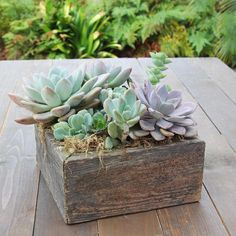 Succulent garden in reclaimed wood easy succulent gift large Wood Planters, Garden Planters, Planting Succulents, Succulent Gardening, Planter Boxes, Organic Gardening, Container Gardening, Easy To Grow Bulbs, Colorful Succulents