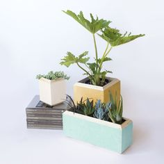 bring the outdoors in - Google Search