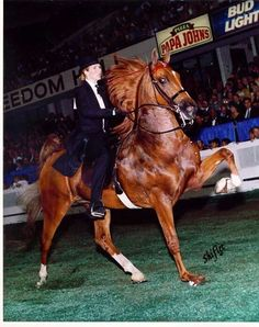 WC Swish - American Saddlebred chestnut gelding, World Champion All The Pretty Horses, Beautiful Horses, Tennessee Walking Horse, Horse Videos, American Saddlebred, Majestic Horse, Horse Saddles, Horse Pictures, Horse Breeds