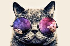 Кошки правят интернетом