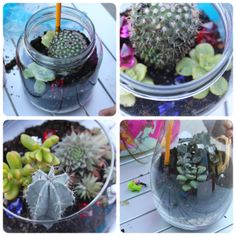 Plants in jars
