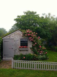 shed with climbing roses....so pretty