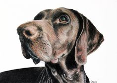 Custom pet portrait - hand drawn to order (above photo is an example of one of my custom drawings). An original drawing of your pet - be it dog, cat, hamster, horse, bird, lizard, etc. - from your photographs, using professional coloured pencils on artist quality paper.  2 size options available - sizes and prices can be viewed by clicking the Select an option drop down menu box above right on this page.  To place an order, select Request a custom order on this page, or select Ask a…