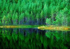 Reflections of a Finnish pond - Pixdaus
