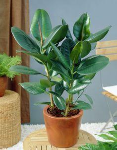 9 Ideas De Plantas Plantas Plantas Jardin Cultivo De Plantas