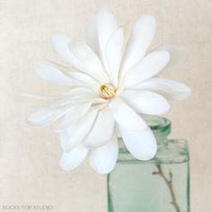 White Magnolia Flower print by Allison Trentelman   rockytopstudio.com