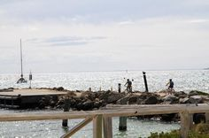 [240312] Rottnest Island WA #travelgram #dreamtraveler #holiday #trip #travel #journey #photography #destination #traveling #potd #perthisok #rottnestisland #perth #australia #westernaustralia #cycling #nofilter by dreamtraveler9 http://ift.tt/1L5GqLp