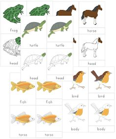 The Helpful Garden: Montessori Zoology - Classes of Vertebrates Nomenclature Set for ages 3-6