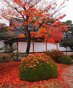 Fall in Nijo Castle, Kyoto, Japan