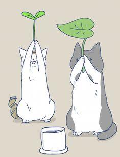 『猫草とトンちゃんの圧』
