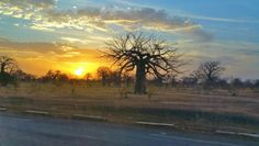 Keur Alpha, Senegal -- Baobab tree and sunset