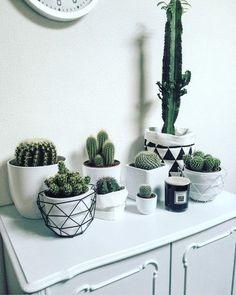 Binnenkijken bij ramona - Mijn familie samen op de foto #cactus
