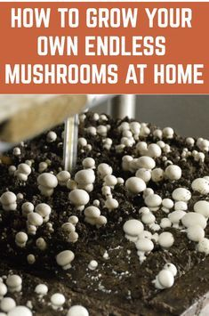 It's surprisingly easy to grow your own mushrooms at home. Here's how. Growing Vegetables In Pots, Growing Mushrooms At Home, Regrow Vegetables, Garden Mushrooms, Growing Plants, How To Grow Mushrooms, Growing Fruit Trees, Container Gardening Vegetables, Planting Vegetables