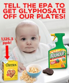 """Last year the World Health Organization Declared Monsanto's Glyphosate to be """"Probably Carcinogenic to Humans"""", now Food Democracy Now! has found widespread Glyphosate Contamination in Popular American Foods! General Mills Original Cheerios tested the highest at 1,125.3 parts per billion (ppb). New independent research shows that potential harm to human health can begin at ultra-low level of glyphosate at 0.1 ppb. Please tell the EPA to get Glyphosate off Your Plate!"""