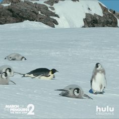 Watch March of the Penguins The Next Step Streaming Online Penguin Parade, Penguin Love, March Of The Penguins, Baby Penguins, Penguin World, Galapagos Penguin, Falling Gif, Penguin Species, Fairy Drawings