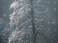 Icy tree by the plaza