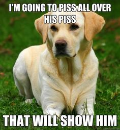 I see Wally doing this all the time at the dog park.