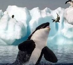 animals in antarctica - Google Search