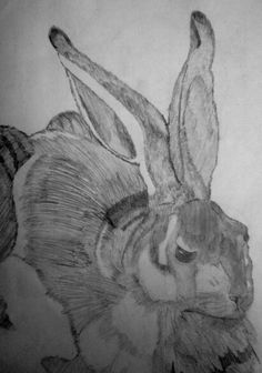 Be-hare