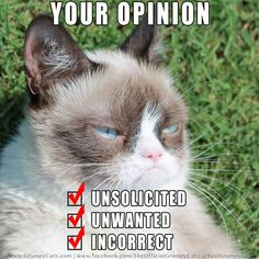 Grumpy cat, grumpy cat meme, grumpy cat humor, grumpy cat quotes, grumpy cat funny …For the best humour and hilarious jokes visit www. Grumpy Cat Quotes, Funny Grumpy Cat Memes, Funny Cats, Funny Animals, Funny Memes, Grumpy Cats, Kitty Cats, Kittens, Funny Quotes