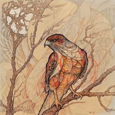 Hawk Art Print  13x13 by inkfreeordye on Etsy, $33.00