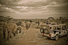 Basketball superstar Yao Ming, in association with WildAid, gets super close to some beautiful elephants - and turns out,he's almost as tall as them! Wow!