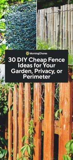 30 DIY Cheap Fence Ideas for Your Garden, Privacy, or Perimeter Cheap Garden Fencing, Diy Garden Fence, Garden Fence Panels, Garden Privacy, Backyard Privacy, Farm Fence, Backyard Fences, Farm Yard, Privacy Shrubs
