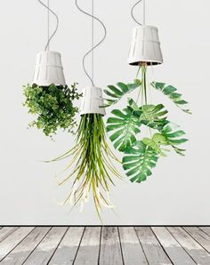 hängende pflanzen kopfüber deko ideen zimmerpflanzen