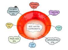 Components of Rice Water (Yu-Su-Ru)