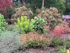 Clematis & Rose Obelisks at RHS WIsley Runner Beans, Herbaceous Border, Obelisks, Clematis, Rose, Garden, Plants, Pink, Garten