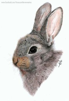 Bunny Rabbit - art by DN .I wish I knew who did this one.I think it is colored pencils, not paint. Bunny Sketches, Animal Sketches, Rabbit Drawing, Rabbit Art, Bunny Rabbit, Pencil Drawings, Art Drawings, Easter Drawings, Pencil Sketching