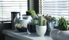 Feng Shui is a great way to bring harmony, peace, and serenity into your home. Today we give you seven quick and easy feng shui tips to create a positive environment in and around your home. Best Indoor Plants, Cool Plants, Cactus Plants, Cacti, Potted Plants, Indoor Cactus, Small Cactus, Cactus Art, Cactus Flower