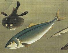 伊藤若冲 Ito Jakuchu 動植綵絵 Doshoku Sai-e 27_群魚図(蛸)-0004