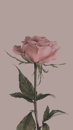 Background image for the iPhone - # for image - Blumen - Hintergrund Pink Wallpaper Backgrounds, Vintage Flowers Wallpaper, Beautiful Flowers Wallpapers, Flower Phone Wallpaper, Rose Wallpaper, Trendy Wallpaper, Flower Backgrounds, Cute Wallpapers, Iphone Wallpapers