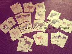 Depuis quelques mois nous achetons de temps en temps des figurines d'animaux de la marque Schleich (et quelques Papo). J'ai créé des cartes avec ces mêmes animaux et je les ai plastifiées. Je vous joins en format pdf le document sur les animaux ainsi...