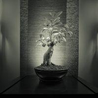 Zen healing center logo
