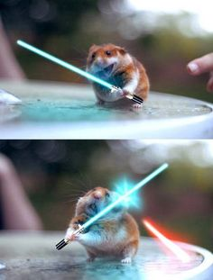 Funny Pictures - Jedi Hamster