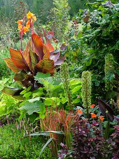 A mixed planting of flowers and foliage in early fall garden, with a variety of hardy and tender plants