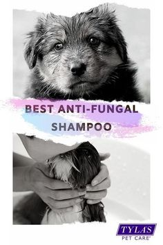 Dog Dental Care, Pet Care, Medicated Dog Shampoo, Itchy Dog, Foster Animals, Kittens And Puppies, Dog Hacks, Shampoos, Pet Grooming