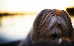 The Pet Anthology | 30 Inspirational Pet Photographers | DogIsArt photography   #pet #photography