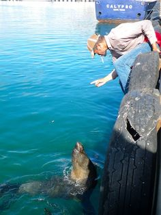 A fisherman and his friend the cape fur seal at Hout Bay Harbour, South Africa