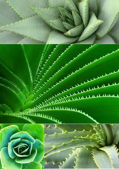 Phyllotaxis: Maths creates Beauty & Symmetry in Nature + Free Collages & Mood Boards Math Art, Science Art, Science Nature, Free Collage, Store Signs, Patterns In Nature, Mood Boards, Free Design, Art Projects