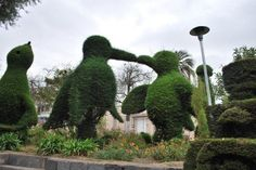 Hand trimmed hedges made into art in Ecuador