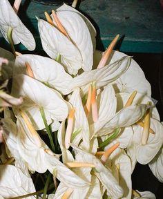 Bloom in the dark -
