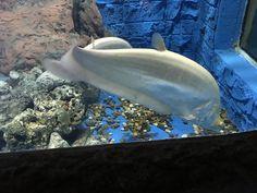Home - Aquarium Fish Home Aquarium Fish, Aquarium Shop, Fish Tank Accessories, Biorb, Underwater Fish, Beautiful Fish, Pets, Animals, Aquarium Store