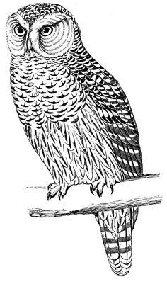 **FREE ViNTaGE DiGiTaL STaMPS**: Free Digital Stamp - Owl Image